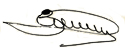 Підпис